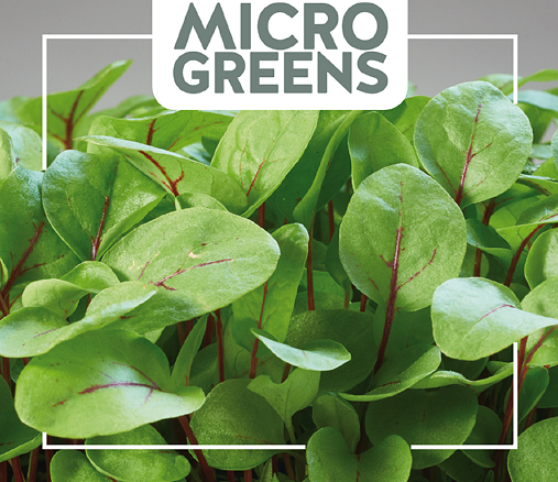 Buzzy® Microgreens Blut-Ampfer