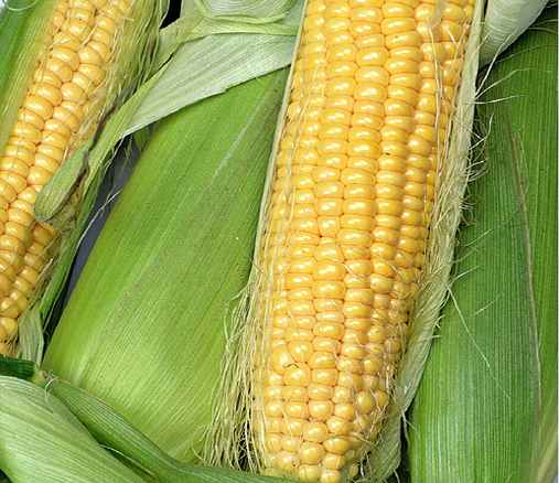 Hortitops® Zuckermais Tasty Sweet F1 (Zea mays)