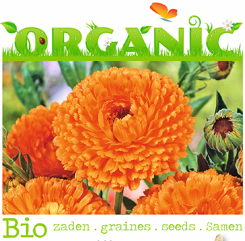 Buzzy® Organic Biosaatgut Ringelblume Ball's Orange (Calendula officinalis)
