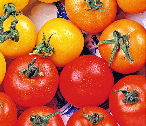 Hortitops® Tomate Farbenmischung (Lycopersicon esculentum)
